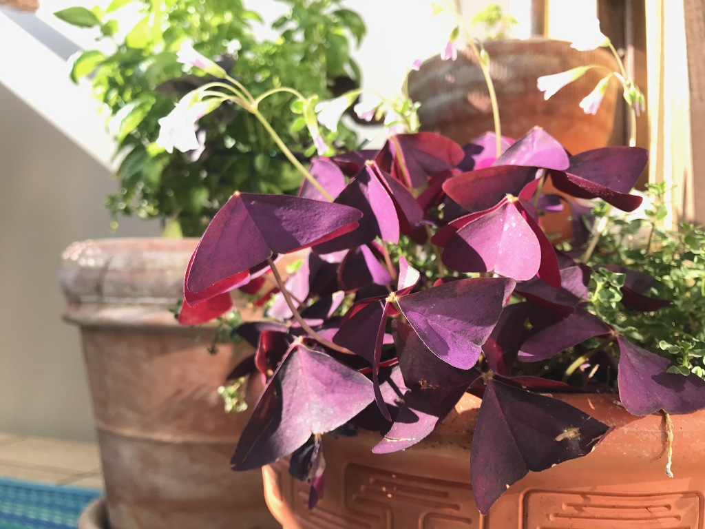 Balkonpflanzen Tipps Fur Den Sudbalkon Teacher S Life